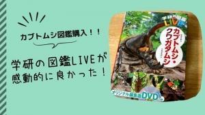 カブトムシ・クワガタ図鑑を購入!学研の図鑑LIVEを選んで良かった理由【感想・口コミ】